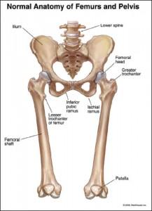 normal-pelvis